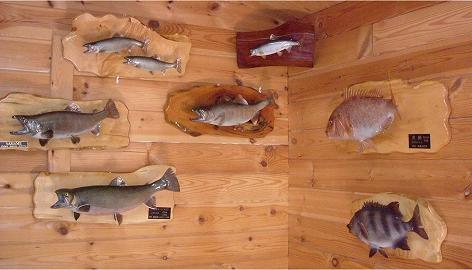工房内の魚剥製ギャラリー